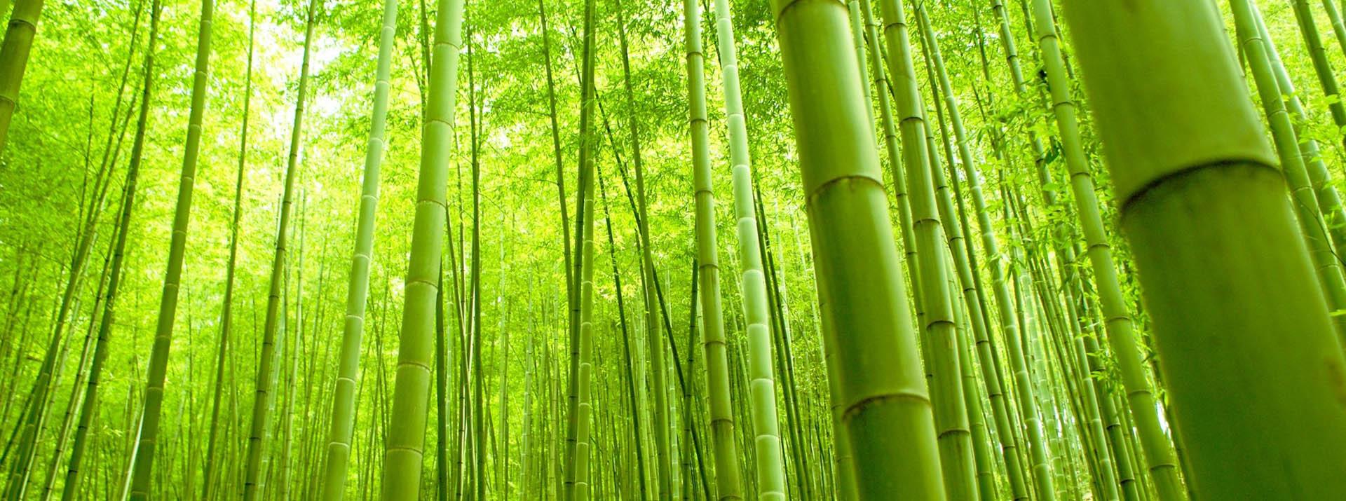 La fuerza del bambu